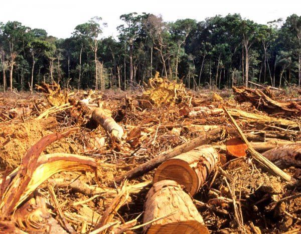 El principal factor que motiva la deforestación es la habilitación de tierras agrícolas, principalmente en el oriente, promovida por empresas privadas y comunidades.