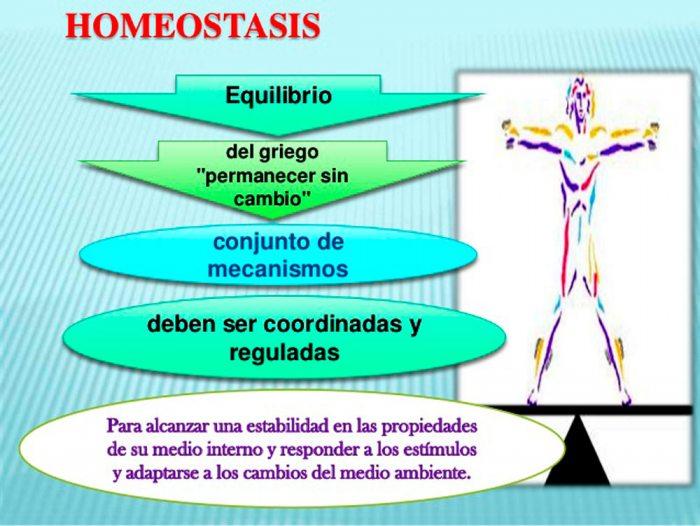 El Diario - Homeostasis
