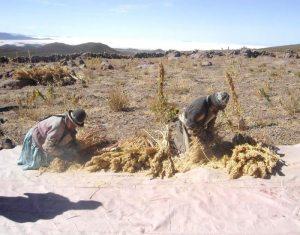 Estudio regional del Banco Mundial.  Bolivia con el menor rendimiento agrario