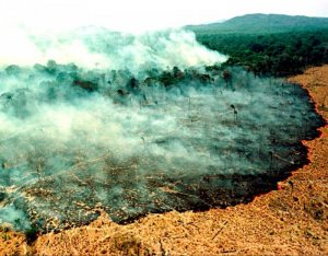 Alarma medioambiental  Deforestación en Bolivia se elevó 167% según la NASA
