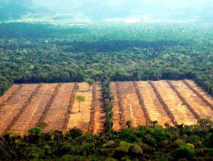 Cada año el país pierde rica cobertura boscosa.  Deforestación avanza incontrolable en Bolivia