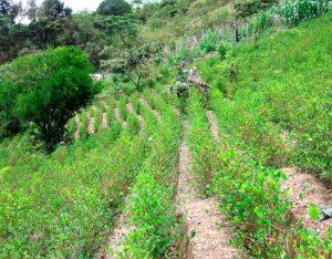 Pérdida de selvas y los ciclos hídricos